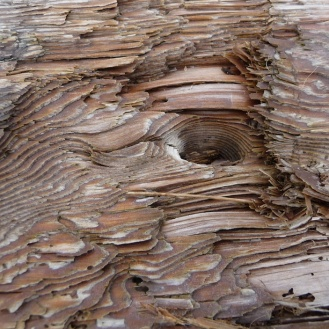Bark patterns on log 4