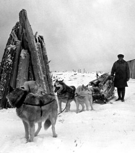 Gus Masik and his dogs at his home on Sandspit Island near Martin Point, Alaska