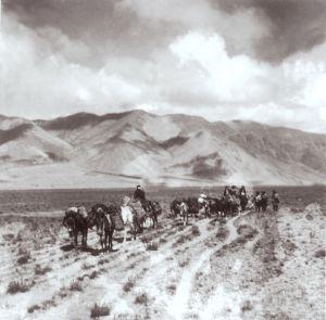 mule-caravan-tibet